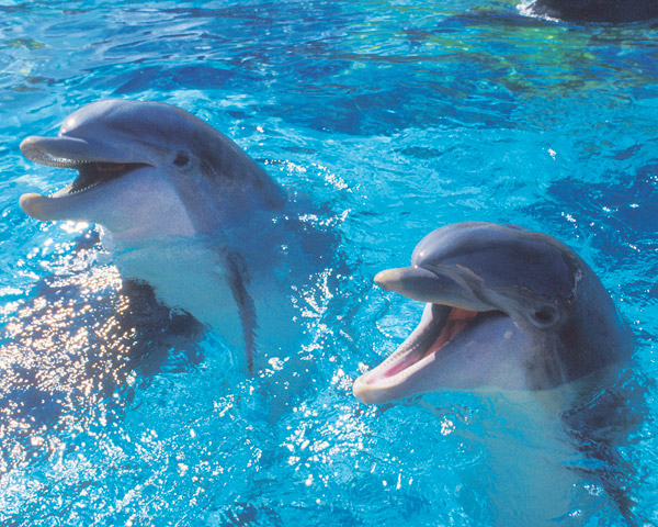 where-do-dolphins-live