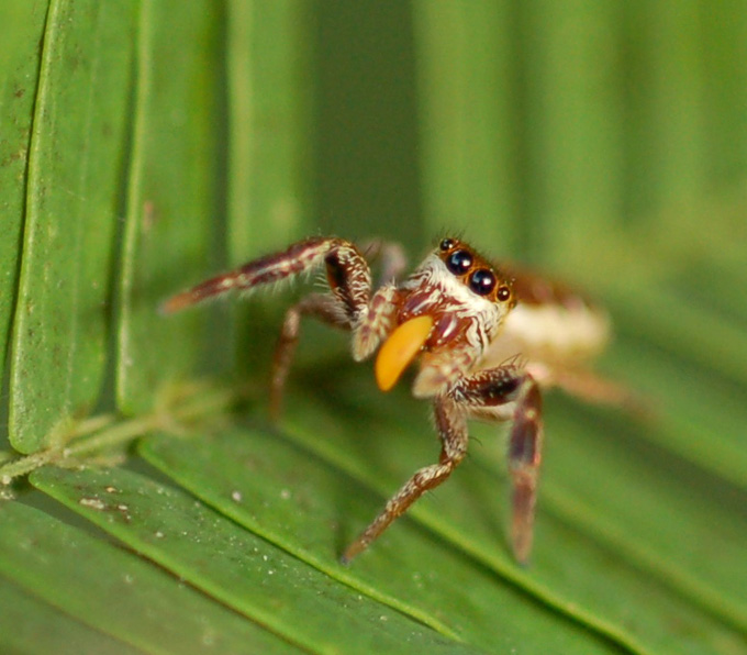 spiders_5a